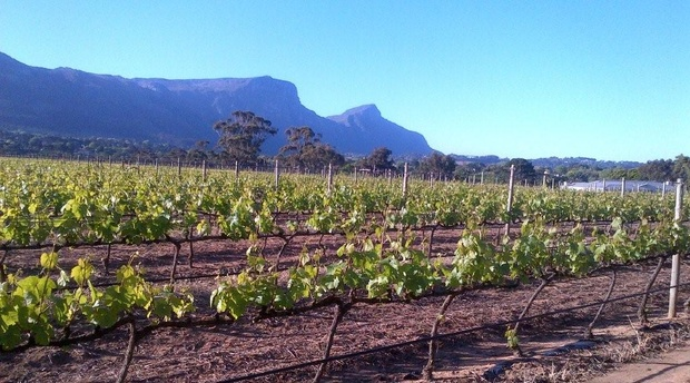 Constantia Wine Route. The Cape's oldest wine yards